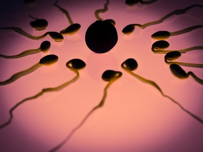 How Long Can Sperm Live Inside the Body?