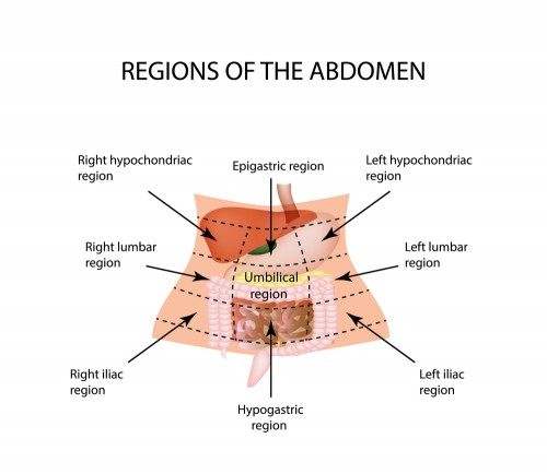 9 Regions Of The Abdomen Healthmad